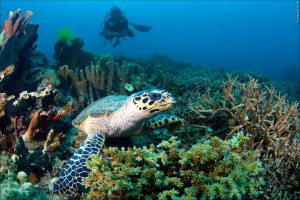 Schildpad in curacao