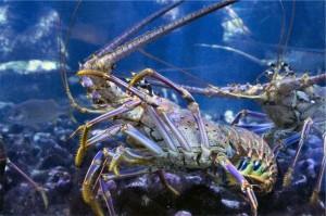 Bijzondere dieren sea aquarium curacao