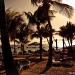 Palmbomen in curacao