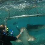 http://www.prachtigcuracao.nl/wp-content/uploads/2014/07/Curacao-Sea-Aquarium-21830.jpg