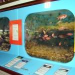 http://www.prachtigcuracao.nl/wp-content/uploads/2014/07/Curacao-Sea-Aquarium-21832.jpg