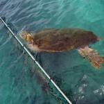 http://www.prachtigcuracao.nl/wp-content/uploads/2014/07/Curacao-Sea-Aquarium-21835.jpg
