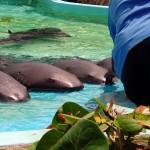 http://www.prachtigcuracao.nl/wp-content/uploads/2014/07/Curacao-Sea-Aquarium-21836.jpg