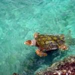 http://www.prachtigcuracao.nl/wp-content/uploads/2014/07/Curacao-Sea-Aquarium-21837.jpg