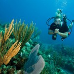 http://www.prachtigcuracao.nl/wp-content/uploads/2014/07/Duiken-op-Curacao-21943.jpg