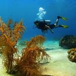 http://www.prachtigcuracao.nl/wp-content/uploads/2014/07/Duiken-op-Curacao-21947.jpg