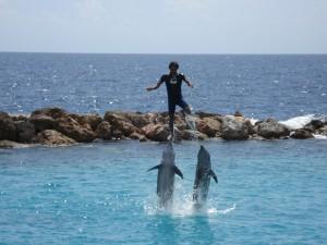 Dolfijnen in curacao