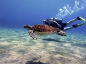 Zwemmen met schildpadden in curacao