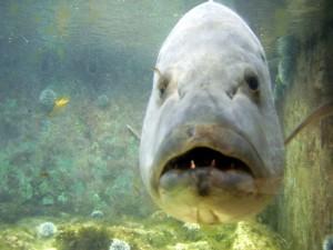 Sea aquarium curacao