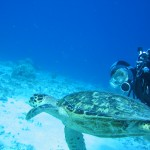 https://www.prachtigcuracao.nl/wp-content/uploads/2014/07/Duiken-op-Curacao-21940.jpg