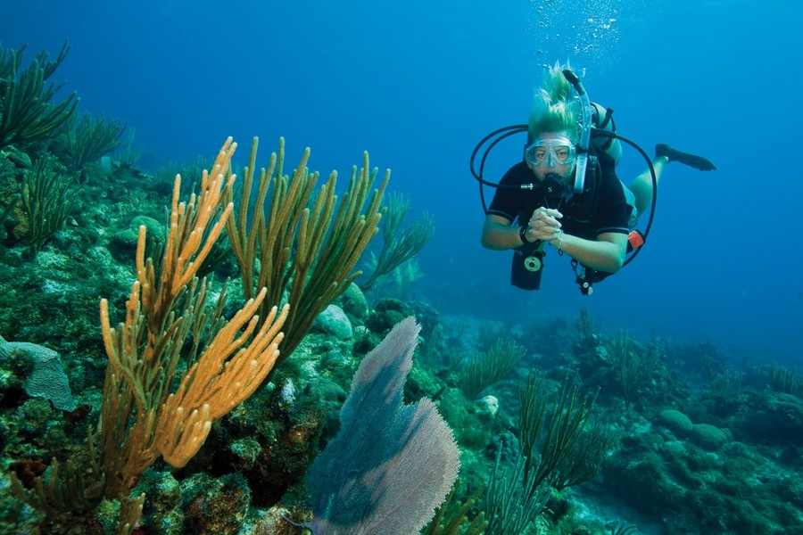 Afbeeldingsresultaat voor duiken op curacao