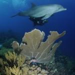 https://www.prachtigcuracao.nl/wp-content/uploads/2014/07/Duiken-op-Curacao-21946.jpg